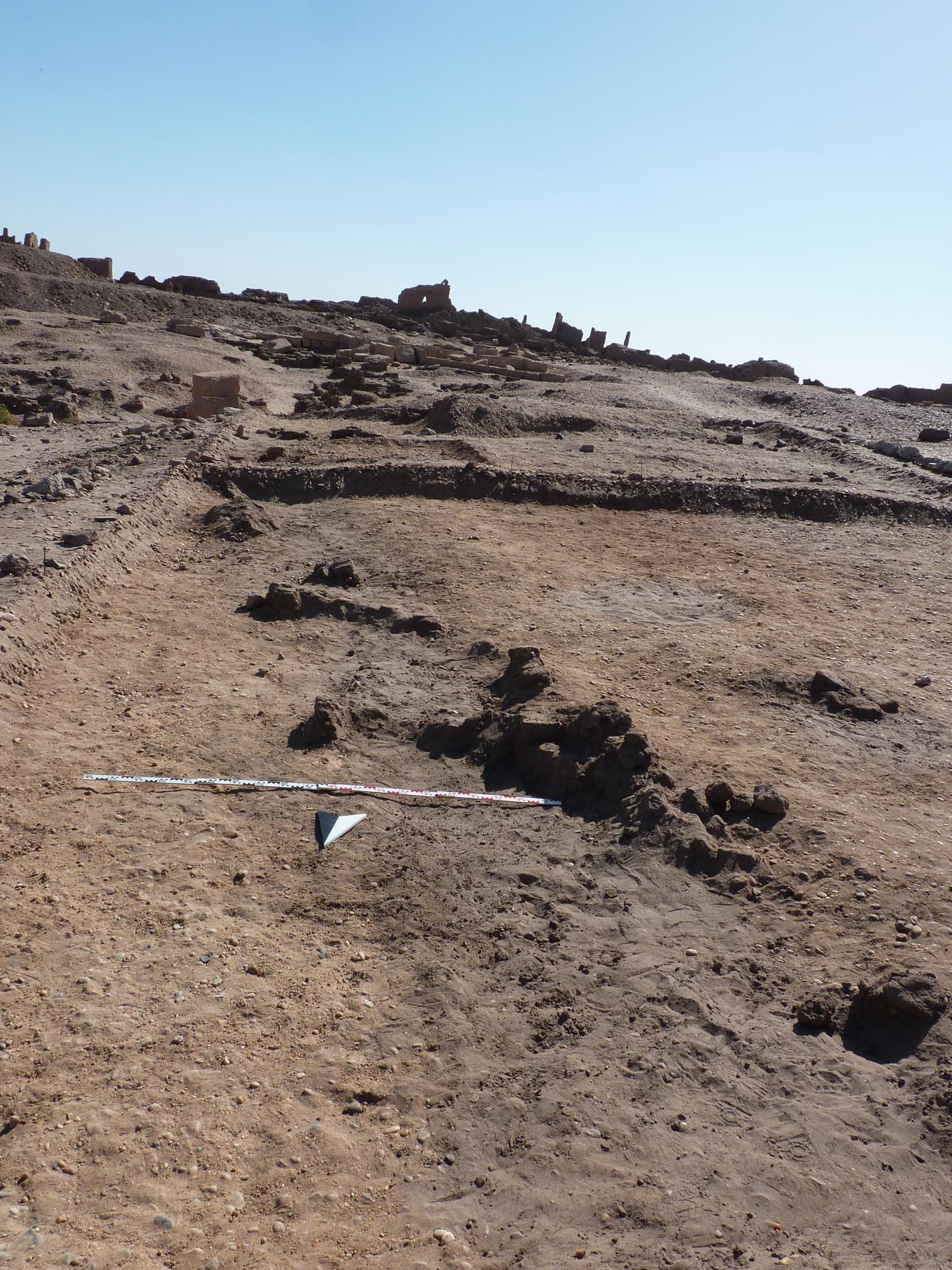 Section of the eastern wall of large mud brick structure at SAV1E. Note the circular depression west of the wall – they also showed up at the geophysical survey's map and are possibly storage pits?