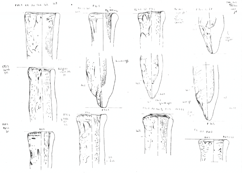 Field drawings of some of the bread mould fragments from SAV1E.